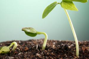 تاثیر ورمی کمپوست در رشد و نمو گل و گیاه