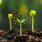 نقش کرم خاکی بر روی خاک کشاورزی-ورمینو پلاس